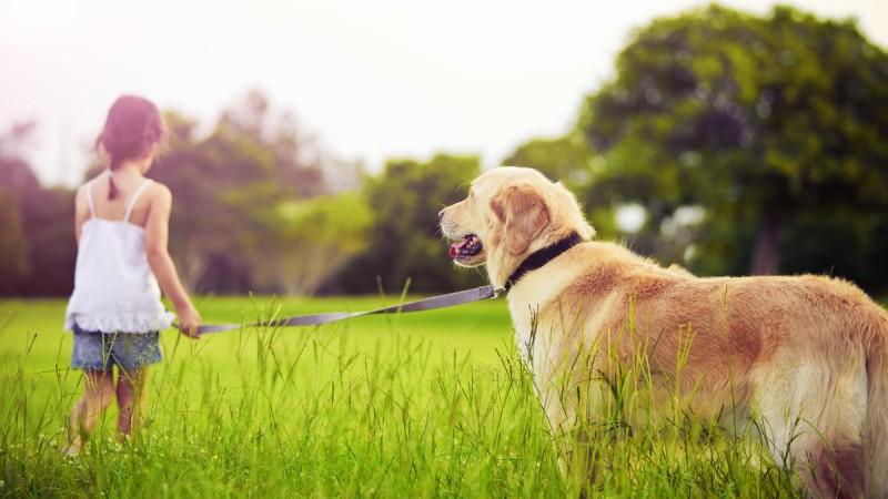 Симптомы аллергии на собак